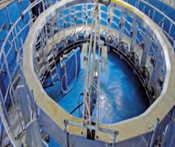 rotary dairy